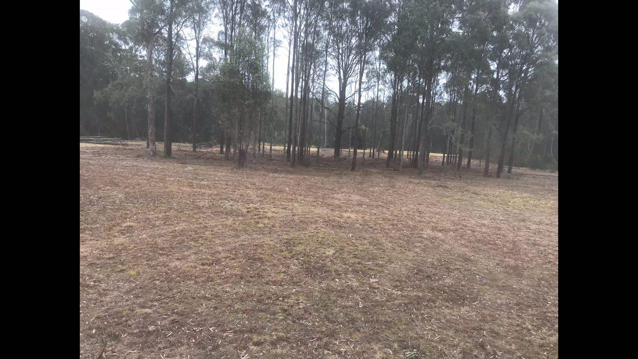 After Land Clearing