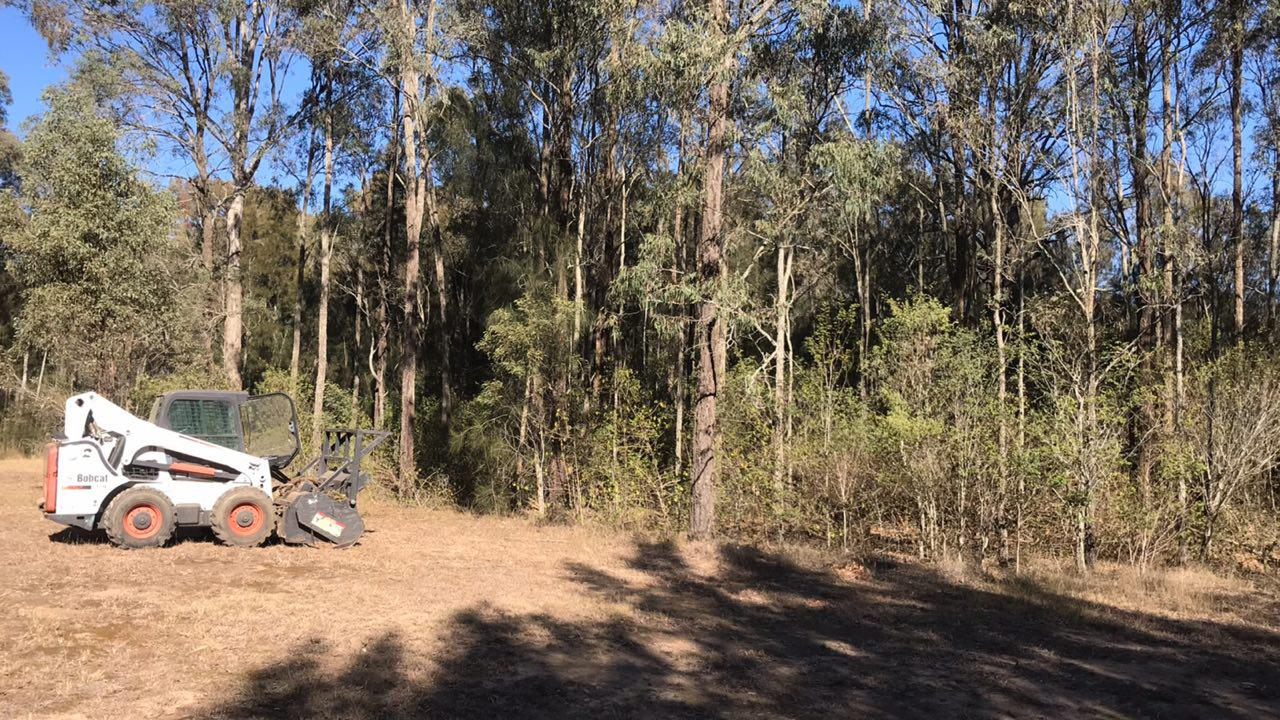 Before Land Clearing